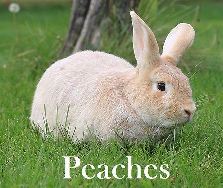 Peaches PB.jpg