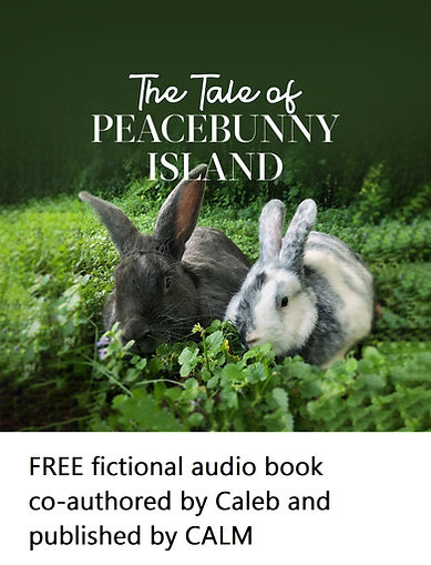 FREE LINK the tale of peacebunny island_