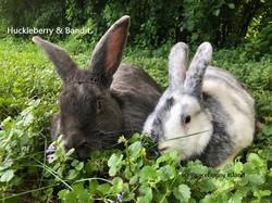 Huckleberry Peacebunny and Bandit