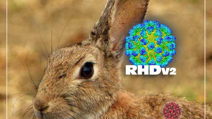 RHDv2-virus_edited.jpg
