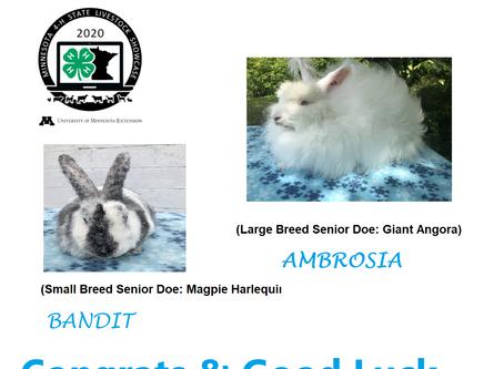 2020 MN State Fair 4H Rabbit Showcase