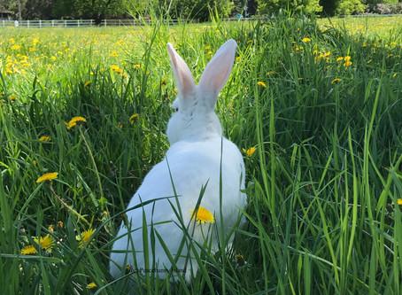 Peacebunny Therapy Rabbit Music