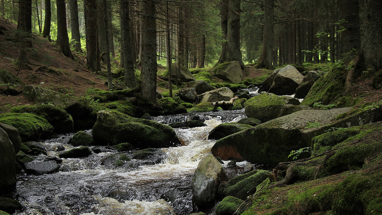 forest-878029_1920.jpg