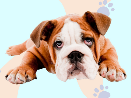 Natural Foods That Help Ease Joint Pain & Stiffness in Dogs