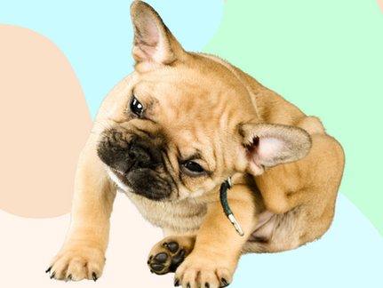 7 Home Remedies For Your Dog's Itchy Skin