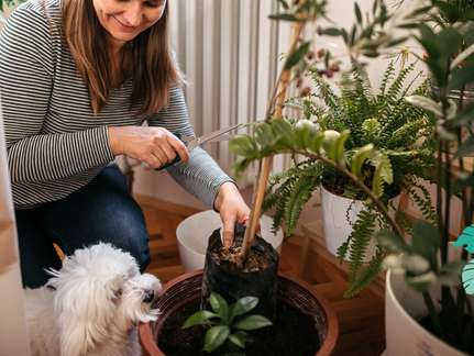 Which houseplants are safe for your pup?