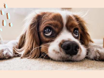 9 Natural Remedies That Are Proven To Ease Your Dogs Anxiety