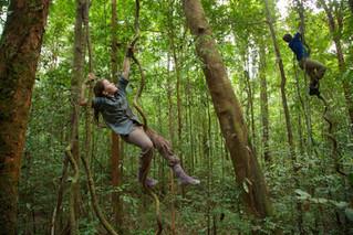Chasing Orangutans