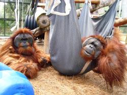 Pongo & Christopher