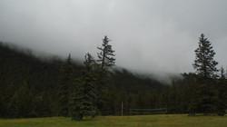 TR fog