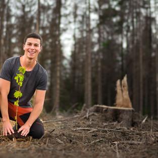 Bäume für den Harz