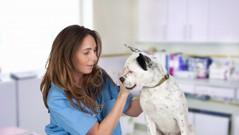 Animal Health Care Product Development
