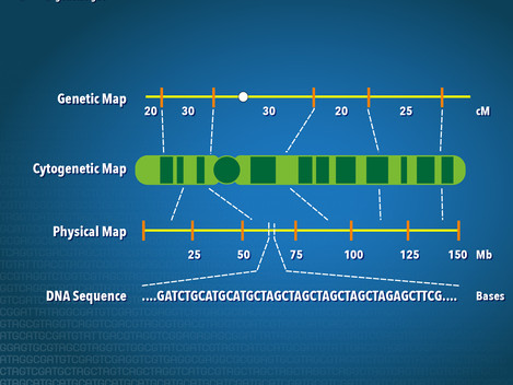 Mapping Technique Speeds Finding Specific Genes