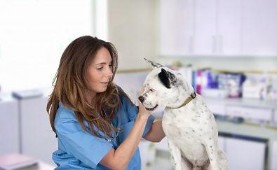 Clinical Animal Drug Development