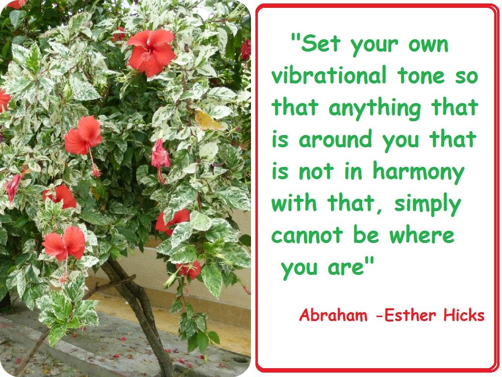 Set Vibrational Tone
