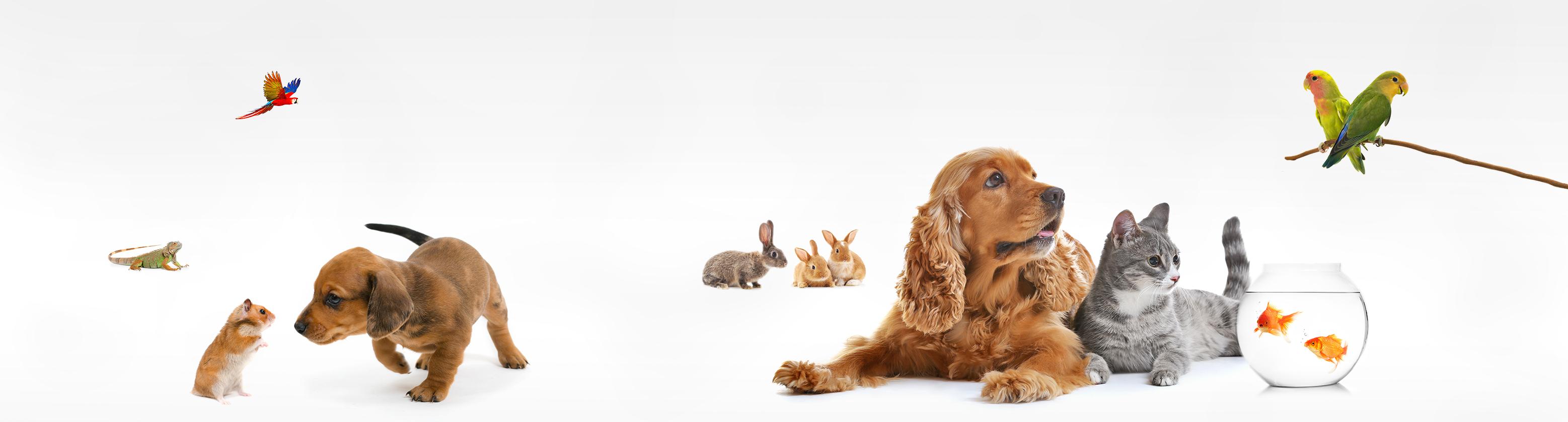 Alle huisdieren