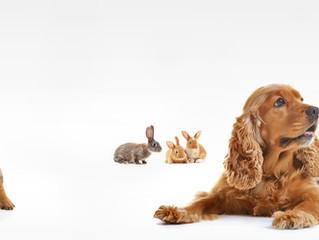 Dicas importantes para seu Pet na hora da consulta, exame e coleta.