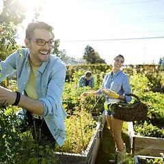 L'App du Terroir récolte légumes