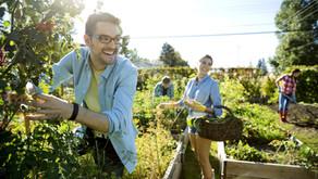 10 jardins comunitários urbanos bem sucedidos