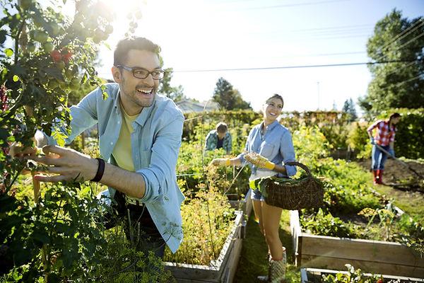 Community Garden st ives