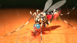 Gov do Est do Ceará - Dengue