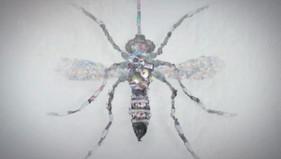 Unimed - Dengue