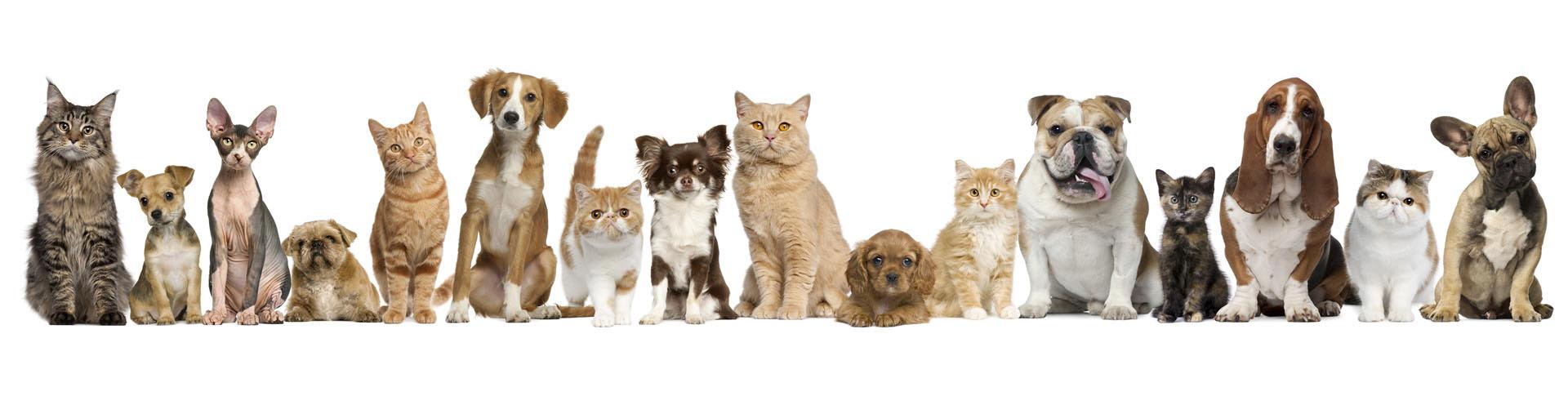 pets-lineup
