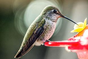 LookItsAHummingbird