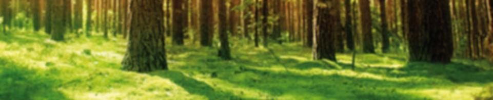 treeeco: Der Weg in die Energie-Unabhängigkeit