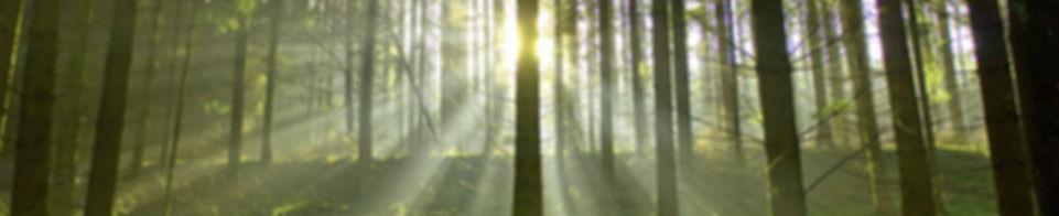 Biomasse: Nachwachsende Rohstoffe