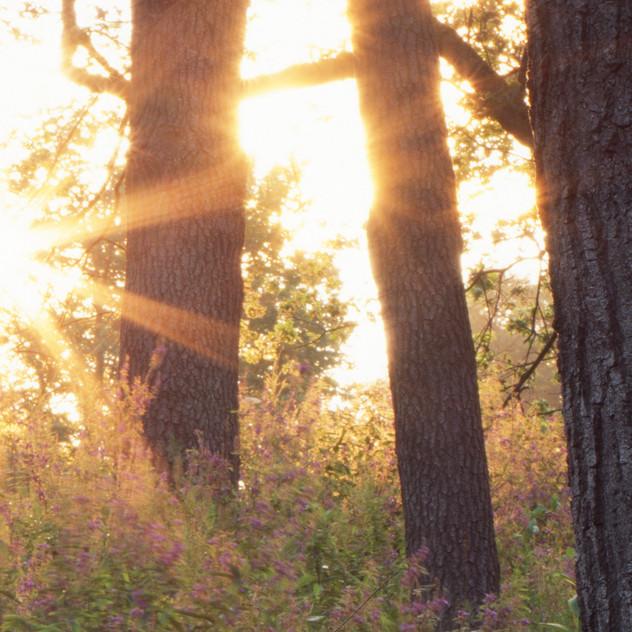 Sunrise crop 2