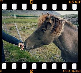 Horse slide.jpg