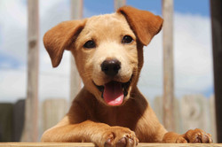 Cute-puppy-Pictures-29