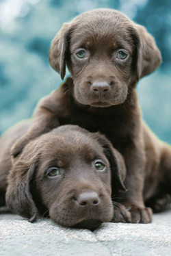 Cute-puppy-photos-39
