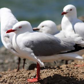 plastic kills animals