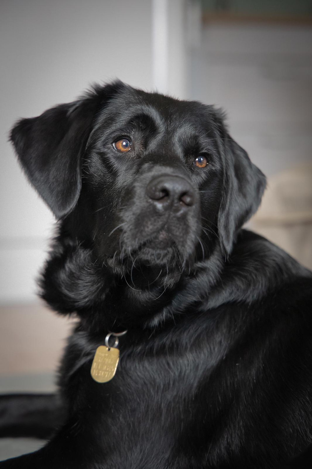 Guide Dog Fostering - Camilla and Isabel's Story