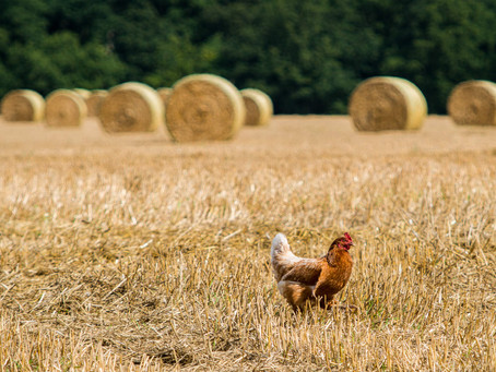 The Future of Farming is Agroecological