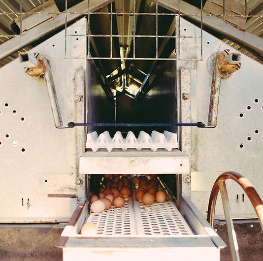 Farming_the_future_eggs.jpg