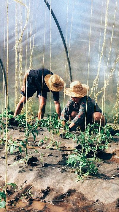 farming_the-Future_edited.jpg