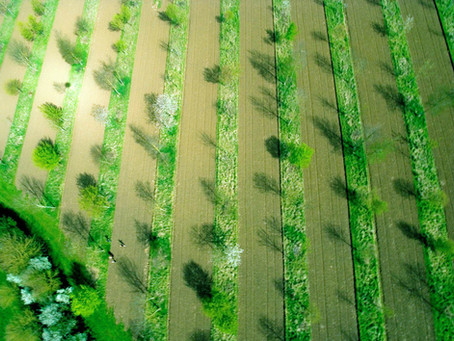 The Agroforestry ELM Test project: Transforming the English agricultural landscape with trees