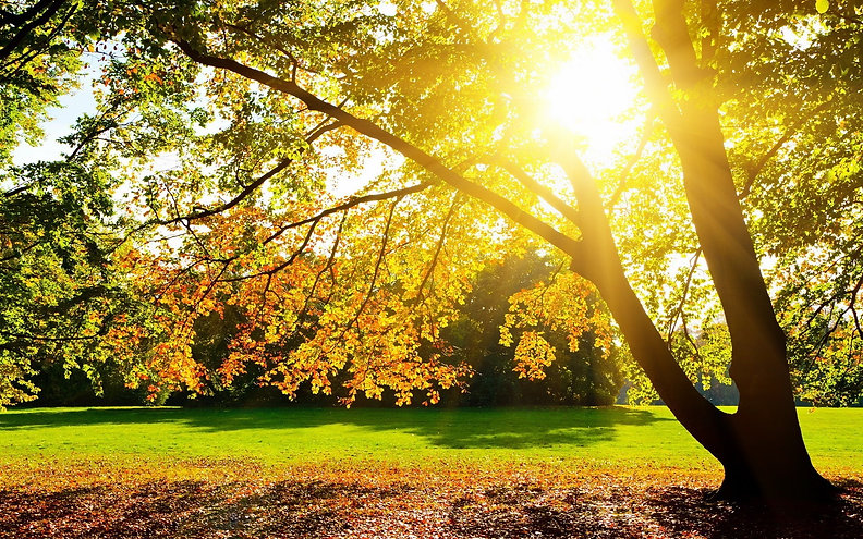 sun-and-trees.jpg