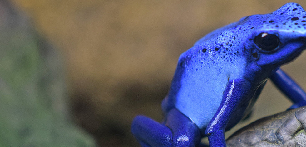 Blue Frog 1.jpg