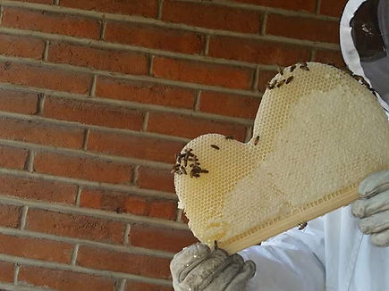 Frsh Comb from a Home Harvest Bee Hive