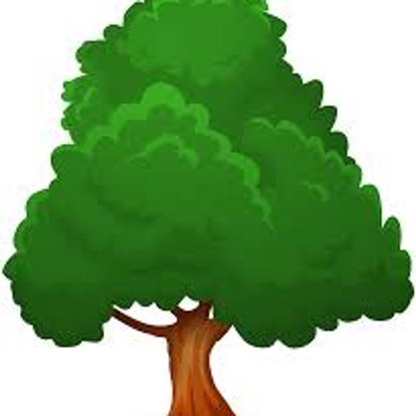SYRACUSE TREE BOARD