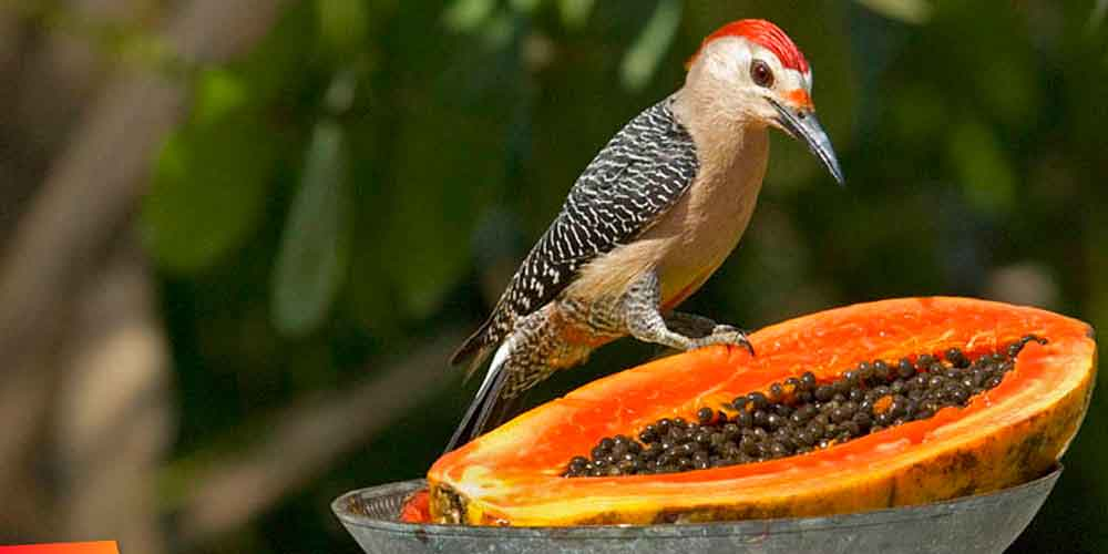 Consejo Shores, Belize-Bird-watching