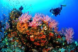 Consejo Shores- Scuba Diving, Cayes