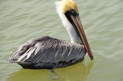 Consejo Shores - Water Birds