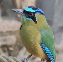 Consejo Shores - Bird Watching