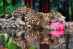 Consejo Shores - Belize Zoo Photo