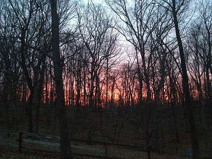 Sunset in the woods next to the studio